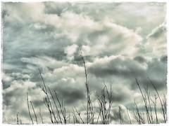 un da mas!! (LolaRivera) Tags: blanco gris negro huelva lola cielo hdr nube celeste ramas