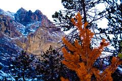 Valle Stretta (Francesco Senatore) Tags: winter snow cold natura tabor neve 2008 inverno freddo rifugio bardonecchia thabor remagi vallestretta noeve 3alpini