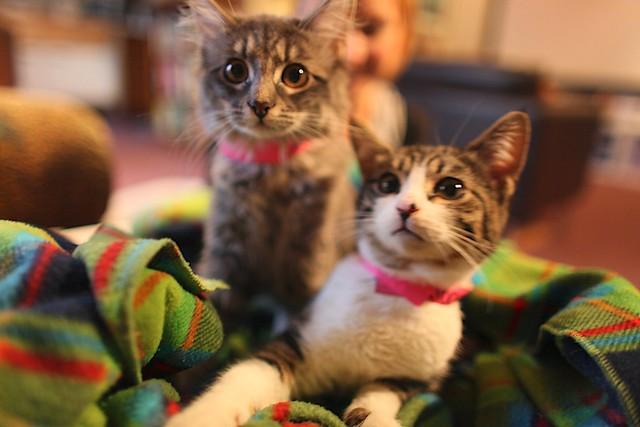 Mochi and Meeme