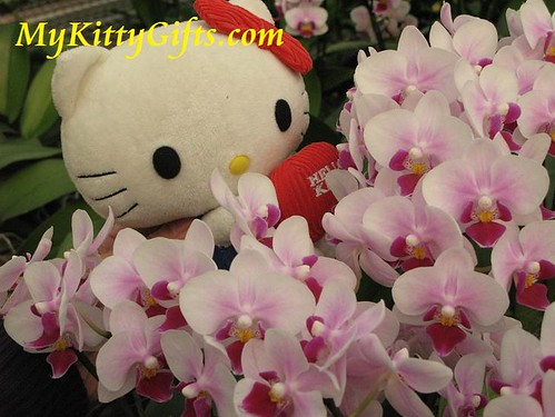 Hello Kitty's View of Pink Orchids in Hong Kong Orchid Trip
