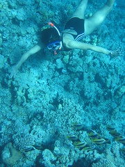 138_3895 (LarsVerket) Tags: egypt snorkling fisk undervannsfoto