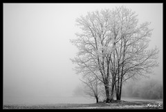Lonely tree under the frost (Xavier.K.) Tags: trees winter blackandwhite bw white snow black france fog frost noir dijon noiretblanc hiver nb arbres neige 18 50 blanc brouillard givre