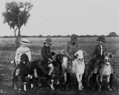 Four boys riding goats, ca. 1918 (State Library of Queensland, Australia) Tags: boy boys hat animals kids children goat australia queensland statelibraryofqueensland kidswithanimals slq isisford goatriding commons:event=commonground2009
