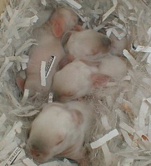 Little One's in March (jimehle58) Tags: nest kits boxes hutch pvc in