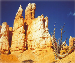 Miracle of Nature - Hoodoos in Queen's Garden - Bryce Canyon, Utah, USA (Batikart ... handicapped ... sorry for no comments) Tags: travel blue red vacation sky orange usa sun white mountain holiday plant mountains tree slr nature rock america square landscape geotagged outdoors utah nationalpark spring ut sandstone rocks day hiking urlaub natur amphitheatre structures peak olympus scan erosion formation textures canyonlands scanned hoodoo layers 1992 geology brycecanyon amerika landschaft sedimentary baum wandern nationalmonument vacanze 2012 frhling southwestusa brycecanyonnationalpark geologie frhjahr coloradoplateau gipfel upanddown backandforth 100faves 50faves 200faves viewonblack colorphotoaward sedimente batikart