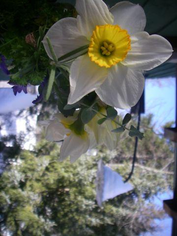 Bouquet de serre froide dans AMÉNAGEMENT PAYSAGER 3247395743_8d9e4180b7