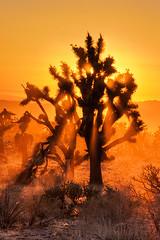 Mojave Desert Sunset (Jeffrey Sullivan) Tags: california road trip light sunset copyright orange usa plant tree jeff nature canon landscape photo colorful desert zoom joshua january southern telephoto mojave rays sullivan dust agavaceae 2009 yucca allrightsreserved kelso 105mm mojavenationalpreserve californiasunset ef24105mmf4lisusm apsc 40d
