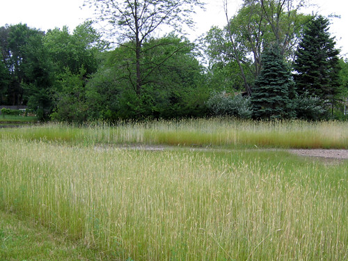 Lakefront Park wetland
