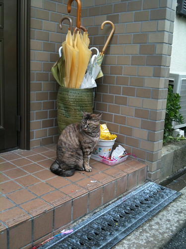 Today's Cat@2010-05-19