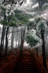 0994 A Stairway to Heaven--Huangshan , Anhui Province , China (ngchongkin) Tags: china stairs niceshot harmony showroom breathtaking supreme huangshan musictomyeyes finegold goldheart thegalaxy beautifulshot peaceaward flickraward flickrbronzeaward heartawards artistsoftheyear betterthangood flickrestrellas beautifulaward highqualityimages spiritofphotography gününeniyisithebestofday discoveryphotos qualifiedmembersonly thebestshots grouptripod artofimages angelawards visionaryartsgallery contactaward livinglifebehindthelens flickrsgottalent bestpeopleschoice flickraward5 mygearandme lomejordemisamigos fireworksofphotos fabulousplanetevo goldstarawardlevel1 ringexcellence flickrbronzetrophy photographyforrecreationgoldaward chariotsofartists photographyforrecreationemeraldaward photographyforrecreationsilveraward photographyforrecreationbronzeaward digitographer photohobbylevel1 thethreeangelslevel1 vivalavidalevel1 vivalavidalevel2