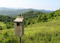 Birdhouse at Max Patch Photo