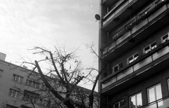 --2013-09-fed-bw-mne-belgrad-031 Belgrade street (tataata) Tags: city autumn trees urban bw streets film composition belgrade fed3 2013