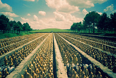 Terracotta army (gen*a) Tags: china horses film army lomography texas katy kodak chinese statues replica xian soldiers warriors forbiddengardens frogeye emperor shaanxi qinsarmies