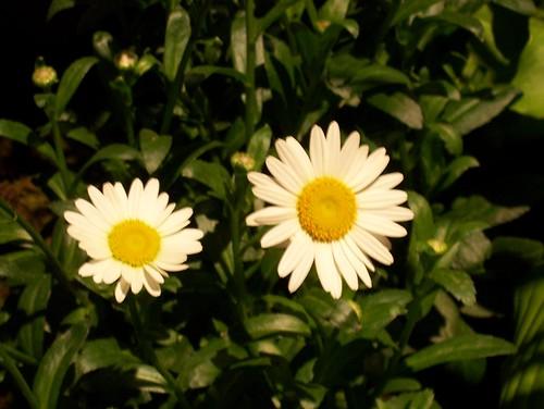 flowershow 009