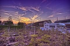 Tokyo Suburbs Sunset (/\ltus) Tags: japan tokyo pentax freehand hdr saginomiya 5xp k10d japanhdr