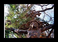 Ansco 50 test 984523-R1-23-23_024 (ǝlɐǝq ˙M ʍǝɥʇʇɐW) Tags: sun film metal easter march rust texas christ jesus 110 rusty courtyard ornament boutique passion decor crucifixion 08 lowfi filmlives testroll 110film fburg ansco50