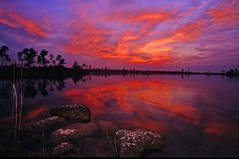 Pine Glades Lake Sunset, Everglades, FL (a walk on t
