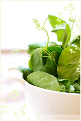 Pea Shoots (La tartine gourmande) Tags: vegetables spring peashoots ilovegreen makingfood latartinegourmande