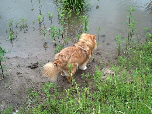 Cinnamin at the Pond