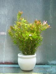 Thủy Sinh Tuấn Anh-Chuyên cây & Rêu Thủy Sinh, Cá Cảnh Biền & Hồ Cá Cảnh Biển - 15