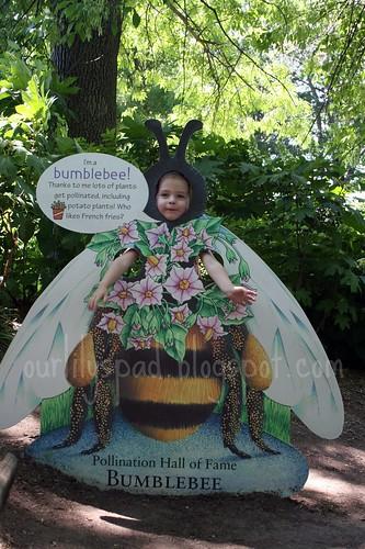 Bronx Zoo Bumblebee
