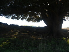 Longest Place name in the World 016 (Just Rye Oh) Tags: newzealand hawkesbay taumatawhakatangihangakoauauotamateaturipukakapikimaungahoronukupokaiwhenuakitanatahu longestplacenameintheworld