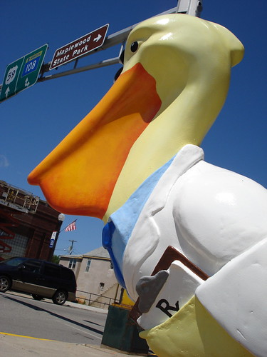 Pharmacist Pelican