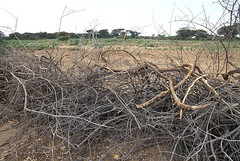 KE016S16 World Bank (World Bank Photo Collection) Tags: africa wood fence dead kenya branches soil fencing dried agriculture twigs worldbank