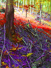 Bewitched (haikus*) Tags: trees forest colours loveit enchanted flickrcolour colourartaward colorfullaward lifetravel