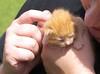 Fanky Farm Visit 08/08 - kitten