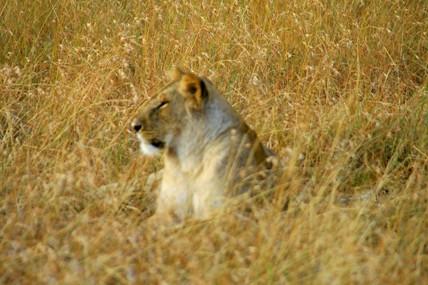 Мое второе пришествие в Кению, часть 4, авт DIK DIK