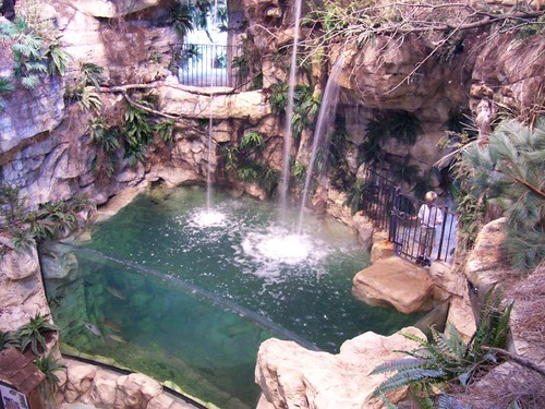 The waterfall and fish tank