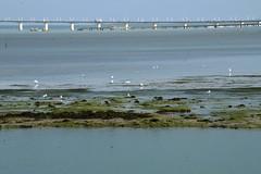 ancien dbarcadre (Enn') Tags: ile 17 lechateau atlantique ocan olron iledolron seaocean charentemaritme