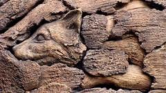 WDW-DAKL-Tree of Life 07376 (2008 0728) Fox-Carnivora Canidae (rustyalaska) Tags: animals florida fox waltdisneyworld themepark carvings treeoflife disneyanimalkingdom canids ordercarnivora familycanidae