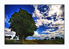 Cool Green and Blue Nature Scene ~ Tayside ~ Scotland (Magdalen Green Photography) Tags: trees nature rural landscape scotland dundee scottish fields tayside hdr 2213 coolgreenandbluenaturescene~tayside~scotland