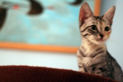 Purrfectly Posed (portmanteaus) Tags: cats kitten guillaume scylla