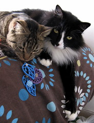 Kitties w/my new necklaces (veganmichele) Tags: wood blue rescue pet flower nature animal cat vintage diy kitten purple tabby craft jewelry plastic tuxedo spca efa