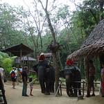 Elephant Trekking, Siam Safari, Phuket thumbnail