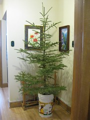 Undecorated Tree