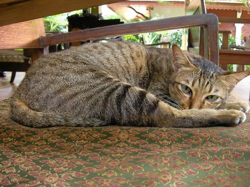 koh samui cat @peace tropical spa 猫