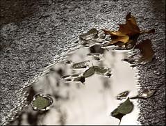 Rain, leaves....autumn (Inmacor) Tags: road park parque autumn light luz water reflections hojas arbol calle spain agua cielo otoo asfalto reflejos suelo castelln uro mywinners abigfave anawesomeshot ltytr2 ltytr1 ltytr3 superlativas a3b inmacor