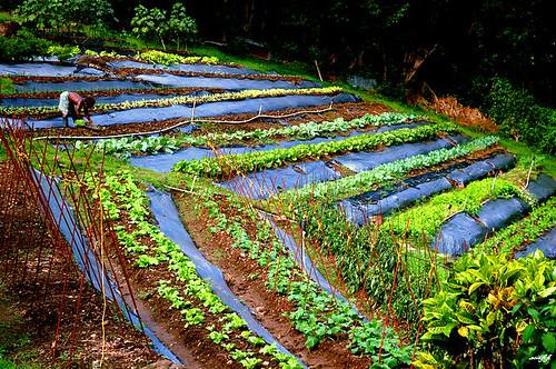 Pembroke,菜園