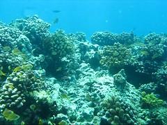 Boracay, Philippines (LarrynJill) Tags: ocean travel sea vacation sailboat island asia underwater philippines dive scuba diving boracay 2008