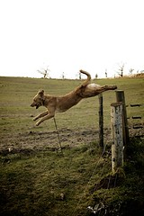Jumping the fence