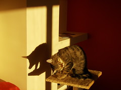 Pichi e la sua ombra: gatto o maiale?- Pitchi and her shadow: cat or pig?