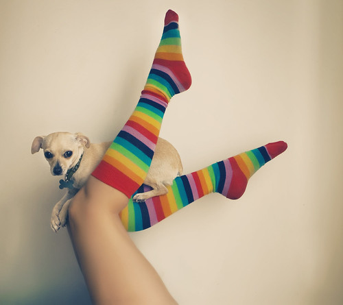 day three hundred forty seven. rainbows and puppies.
