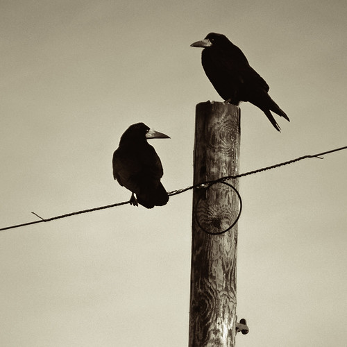Like a bird on a wire by Dan Baillie