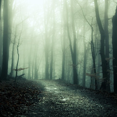 Winter (96dpi) Tags: trees fog forest way klein nebel path volkspark wald bäume glienicke