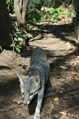 Foxy Or Sebastian