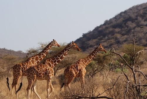 National Parks Kenya_24